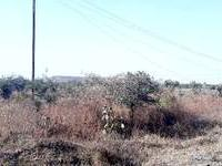 Agricultural land in Nagpur - Agricultural land for sale in